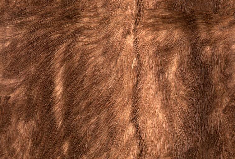 毛皮材质素材